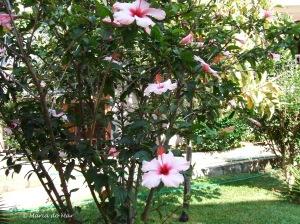 As Flores da Amizade, 2009.JPG