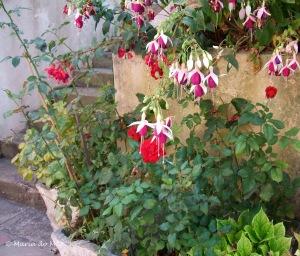 Flores à Beira da Porta Amarela, 2009.JPG