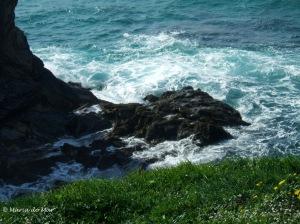 Mar de Verdura Florida, 2010