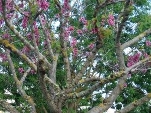 Árvore Florida de Primavera, 2010