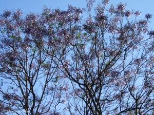 Árvore Lilás, 2010