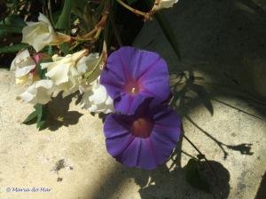 Flores Sentadas no Degrau, 2010