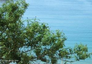 Mar Arborizado, 2010