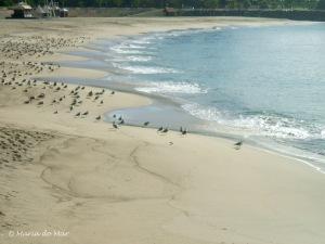 Gaivotas na Praia, 2010jpg