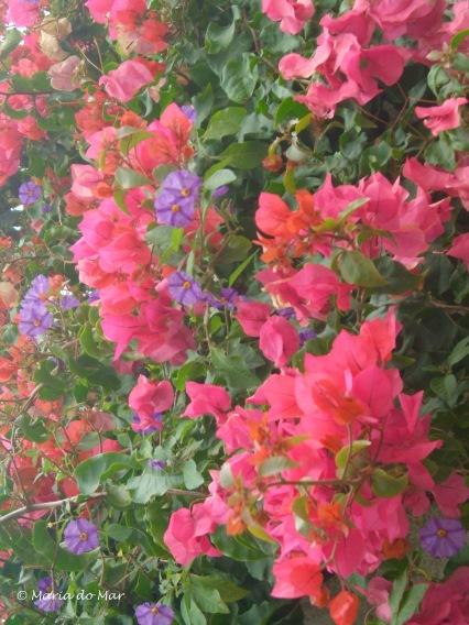Flores Murais, 2011