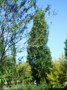 A Árvore-Guerreira, 2011
