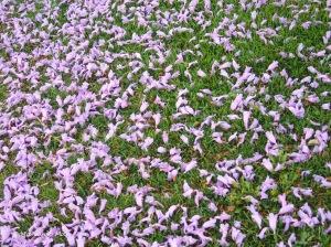 As Flores Caídas, 2011