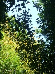 Árvores Matizadas, 2011