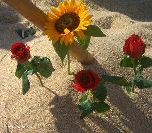 Flores da C&JR, 2011