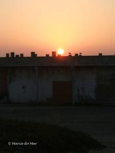 Sol Poente com Gaivotas, 2011