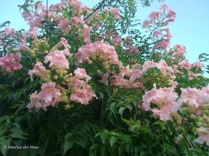 Flores de Mãos no Céu, 2011