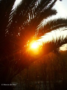 Palmeira do Sol, 2011