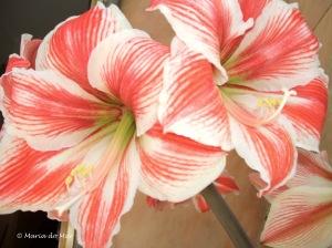 Flores-Avó-Mãe, 2012