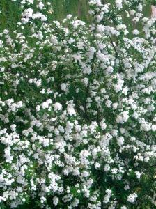 Flores Brancas da Estrela, 2012