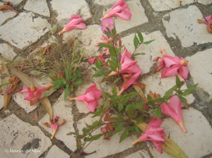 Flores-Rosa Caídas, 2012