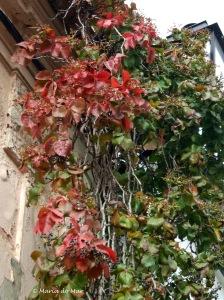 Flores no Telhado, 2012