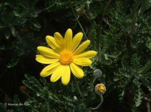 Flor de Esperança, 2013