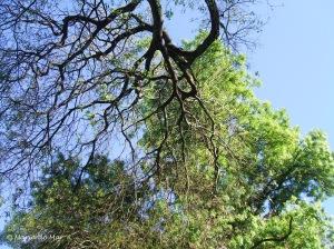 Árvore de Cabeça para Baixo, 2013