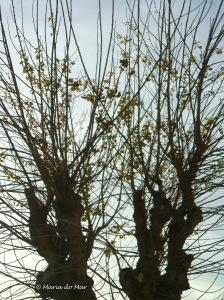Árvores à Procura da Primavera, 2013