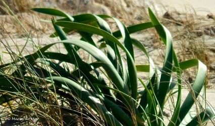 Planta Costeira