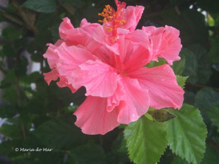 Flor orvalhada