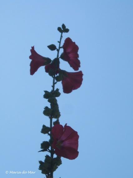 Flores no Céu, 2013jpg