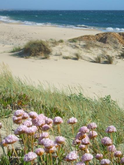 Praia, duna e guardiãs, 2013