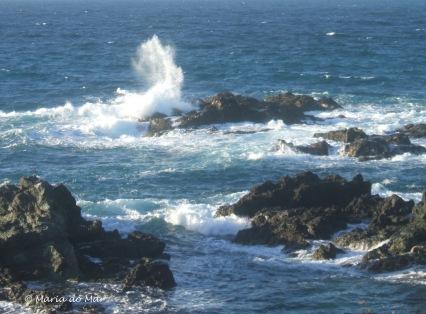 Mar Saltitante