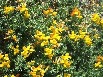 Flores Amarelas, 2014