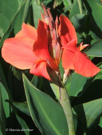 Flor Vermelha, 2014