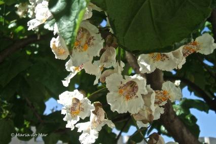 Flores-Lobo
