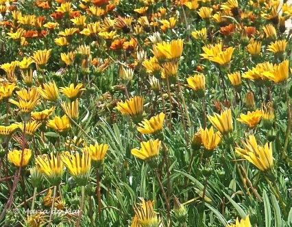 Flores do Meio Dia
