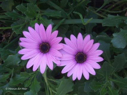 Flores do Meio-Dia