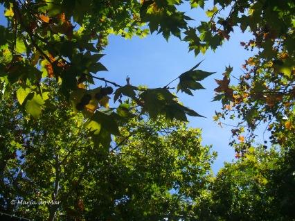 Simbiose de Árvores, 2014