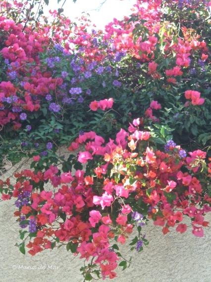 Flores da Manhã