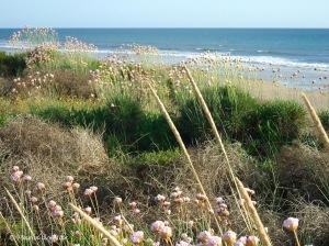 Praia com Canteiro, 2014