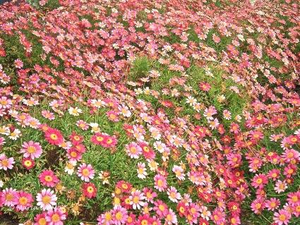 Flores da Minha Aldeia, 2012
