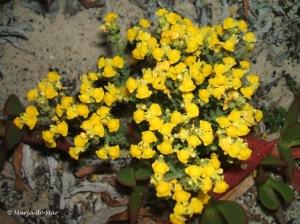 Flores dos Medos