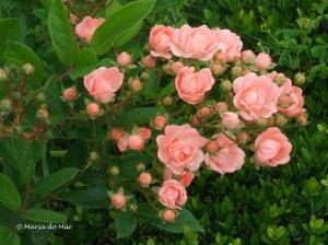 Flores de Braço dadao, 2010