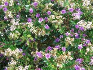 Flores do Jardim Santo, 2010