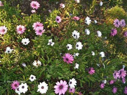 Flores de Cheiro a Primavera, 2015