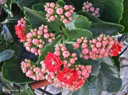 Flores do Coração do Alentejo, 2015