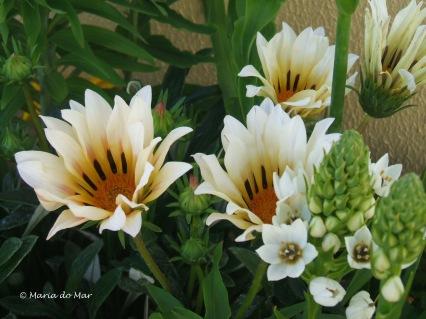 Flores Acordadas, 2015