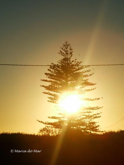 Sol Nascente na Palmeira