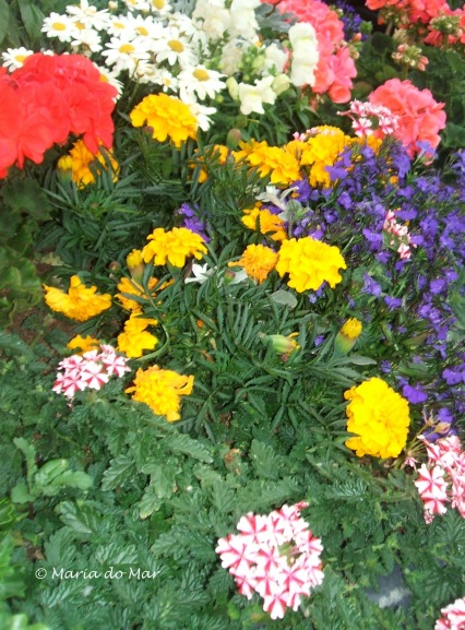 Flores às Cores, 2015