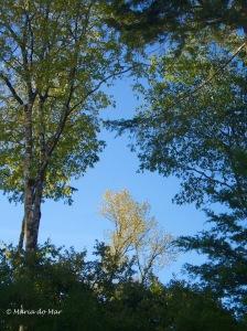 Árvores Douradas