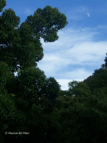 Árvore-Mulher, Jardim da Estrela, 2015
