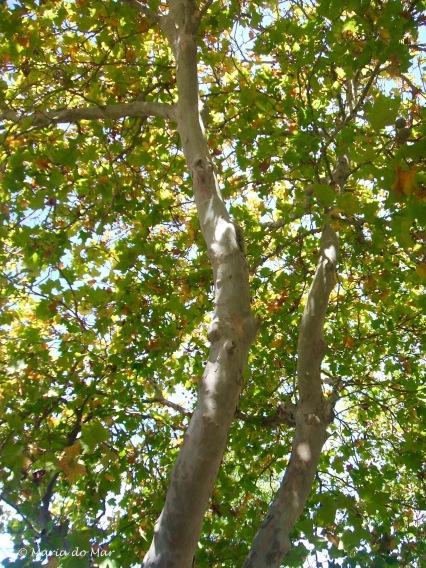 A Árvore Transparente, 2014