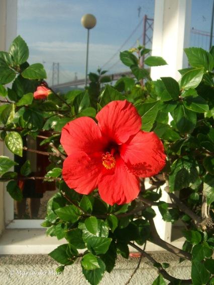 Flor à Beira-Tejo, 2015