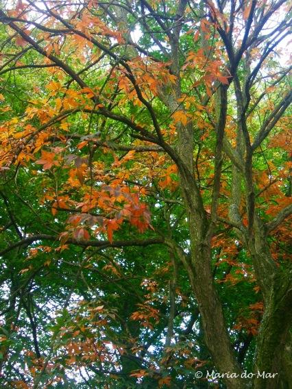 Árvore de Outono, Haia, 2015